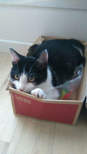Portrait Of A Cat Eye4enchanting Félin