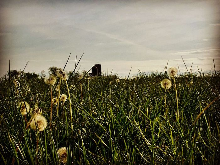 Farmland in Kentucky Kentucky  Farm Grass Farmland Landscape Nature Photography Beauty In Nature Beauty Sky