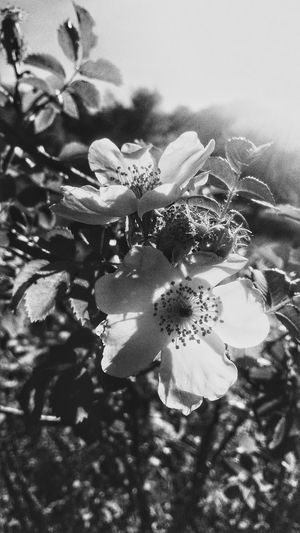 Black Flower Nature Sunny Black&with Black Flower Nature Black&with With Sunny Give First Eyeem Photo