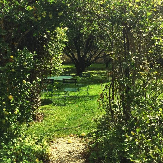 Derniers rayons de soleil sur le jardin. Nature Beauty In Nature Outdoors Tranquility Nature Green Color No People