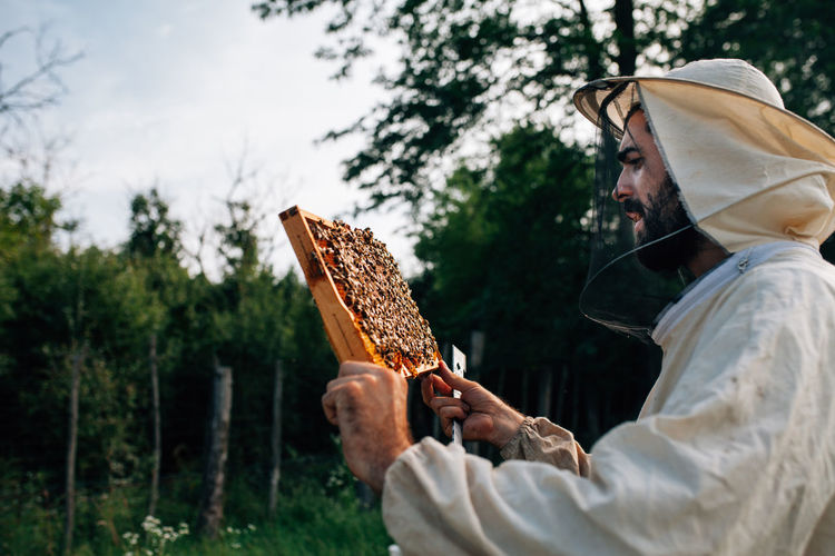 Side view of beekeeper examining beehive