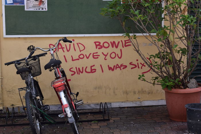 #art #bicycle #bikes #DavidBowie #graffiti  #idol #inspiration  #love #Plant Day No People Outdoors