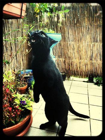 Katzen Black Cat Show Me Your Kitty Cat Cat