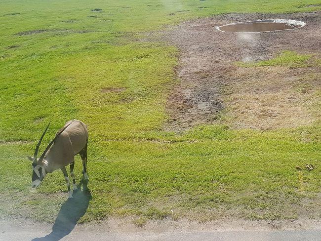 Outdoors Day People Water Tree Nature Serengeti-Park, Hodenhagen