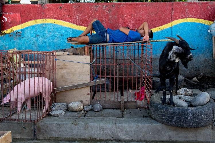 Domestic Animals EyeEm Gallery Eyeem Philippines One Person Real People Street Street Photographer Street Photography Streetphoto_color Streetphotography The Street Photographer - 2017 EyeEm Awards