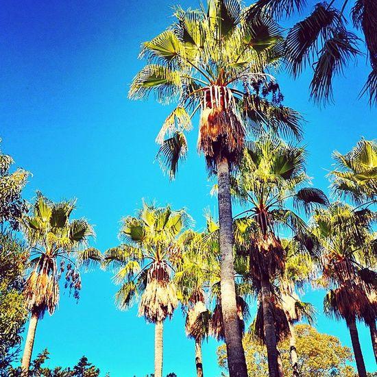 Jardin du Rayol Nikonfrance Nikonfr Nikon Igerstoulon Var PACA Méditerranée Igerspaca Monbeauquartier Palm Palmiers Bluesky Igersfrance Sun @var_matin