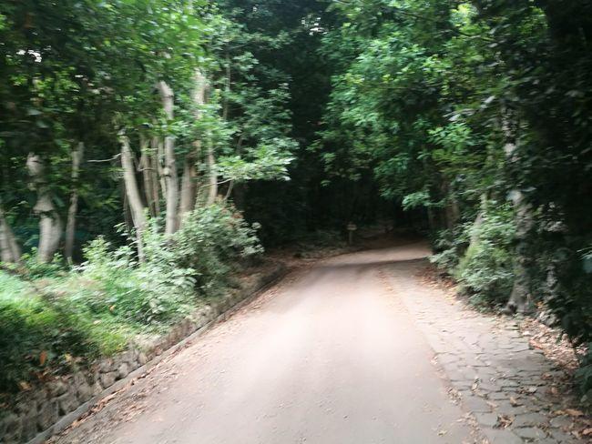 Green Color Tree Forest Landscape Woods