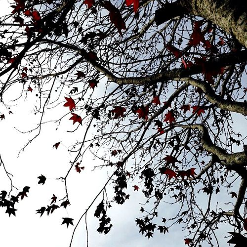 Lovely wintery day Wintertime Trees Nature_collection Leaves And Sky The Week Of Eyeem Beautiful Nature Showing Why I Could Be An Open Editor Randomshot Geting Out Cold Days