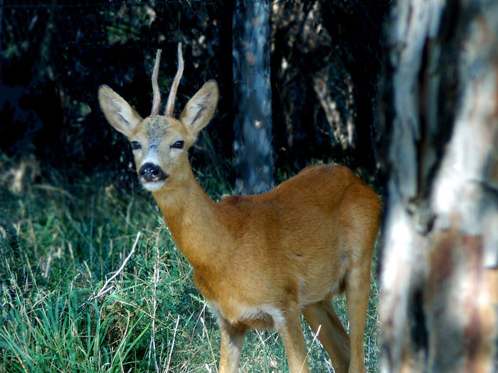 Alertness Animal Photography Animal Themes Forest Nature No People Outdoors PreserveNature Roe Deer Selective Focus