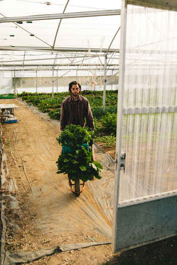 Young man carrying plants in wheelbarrow at greenhouse