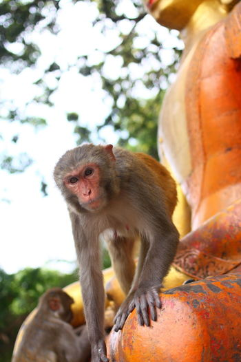 Portrait Of Monkey On Buddha Statue