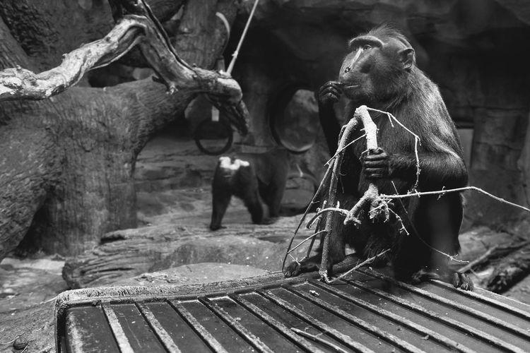 Monkeys in zoo