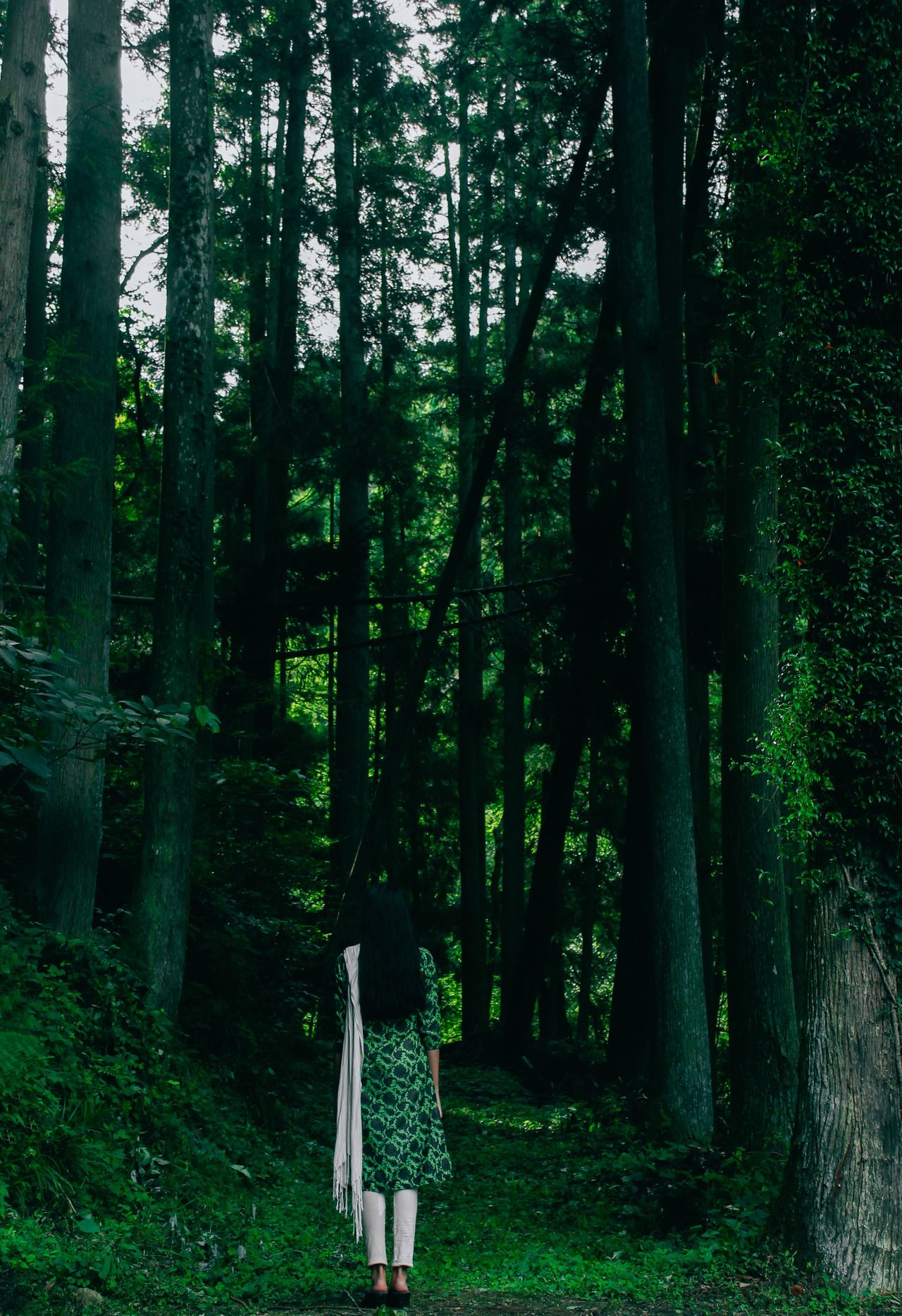 Rear view of woman wearing salwar kameez amidst trees in forest