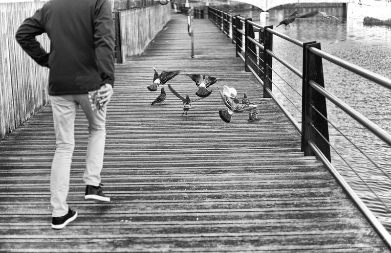 Art Birds Birds Collection Black And White Black And White Photography Blackandwhite Blackandwhite Photography Creative Photography Day Monochrome Outdoors People Photographers Real People Sunday Urbanphotography Walking Women Photographers