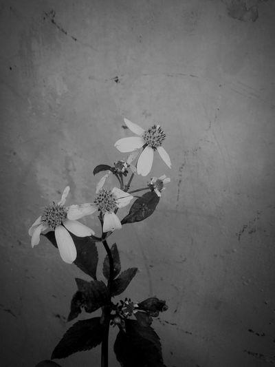 Life as s flower First Eyeem Photo