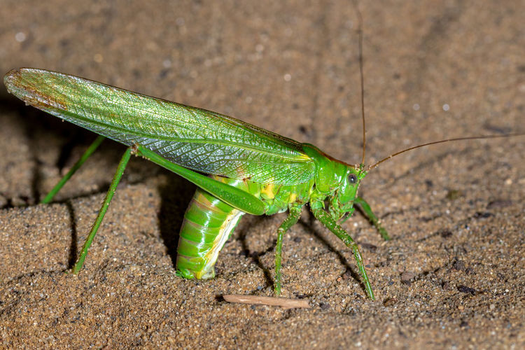 Close-up of grasshopper on a land