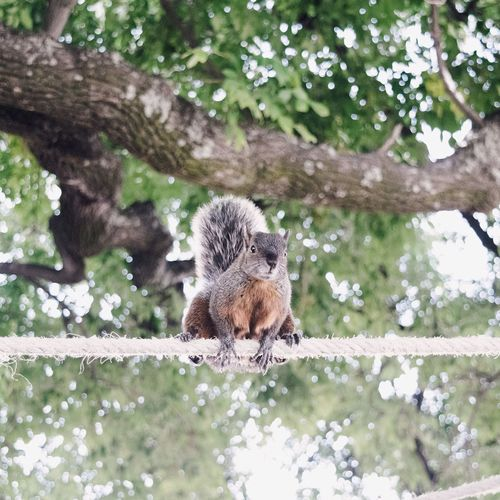 Low Angle View Of Squirrel On Rope Against Tree