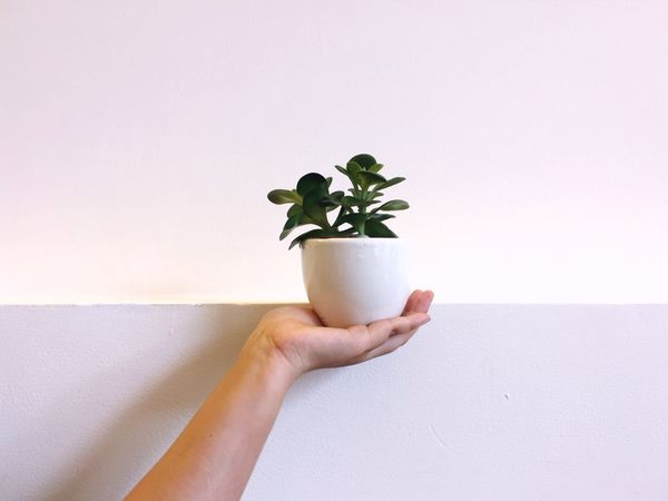 Human Hand Human Body Part Holding Copy Space Human Finger One Person Plant Leaf Growth Indoors  White Background Real People Close-up Freshness Day People Adult Sommergefühle EyeEm Selects