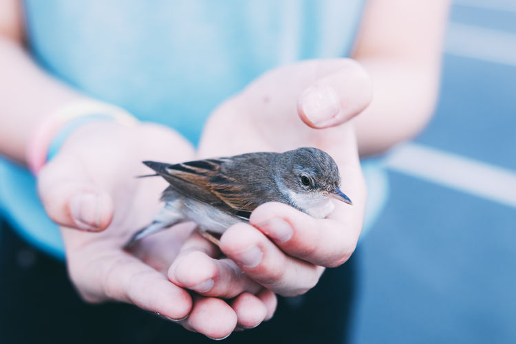 Close-up of hand holding bird