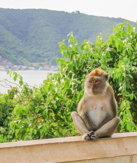 Monkey sitting on plant against mountains