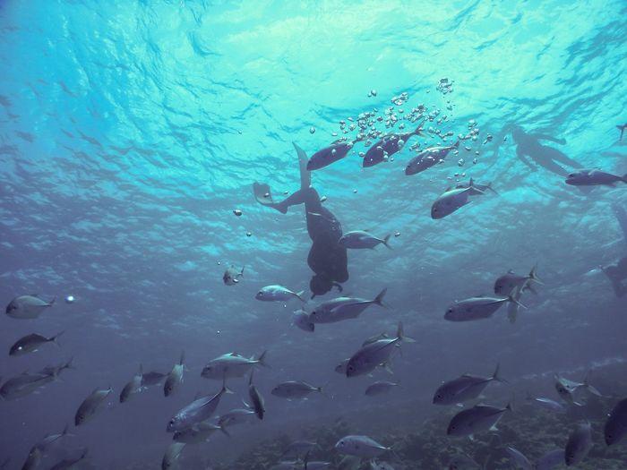 Free Diving Underwater Water Sea Animal Swimming Fish Vertebrate UnderSea Aquatic Sport Sea Life Scuba Diving Marine School Of Fish Animals In The Wild Sport