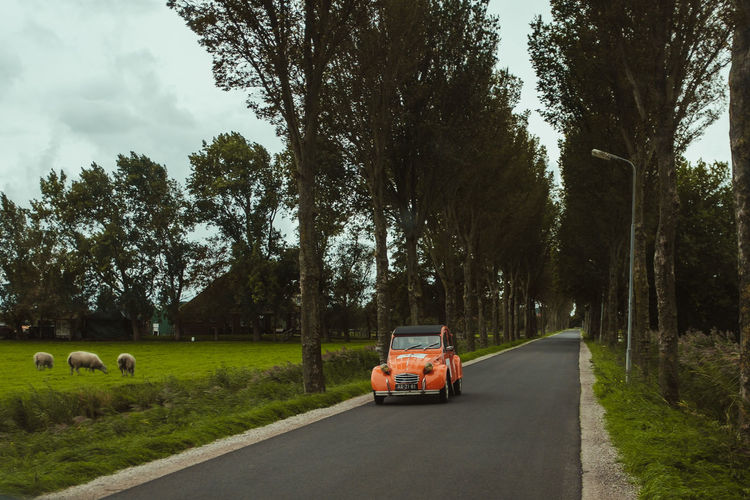 Cars Car Day Field Grass Green Color Growth Land Land Vehicle Mode Of Transportation Motor Vehicle Nature No People Outdoors Plant Retro Styled Road Sheep Sky Street Transportation Tree Tree Trunk My Best Travel Photo