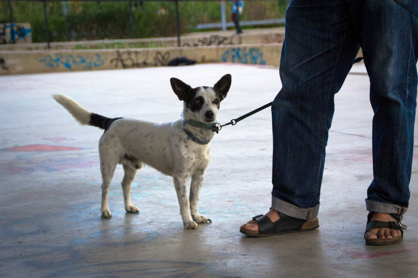 Day Dog Domestic Animals Human Leg Legs Legs And Feet Lifestyles Littledog Low Section Mammal Men One Animal One Person Outdoors People Pets Real People Sitting Standing