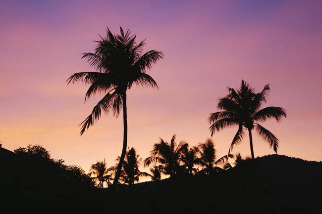 sunset Visiting Place Pastel EyeEm Selects Palm Tree Tree Silhouette Sunset Tree Trunk Low Angle View Tranquility Sky Nature Outdoors Close-up Space Beauty In Nature No People Heat - Temperature Scenics