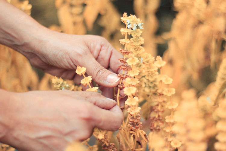 Adult Close-up Day Flower Flowering Plant Focus On Foreground Freshness Hand Holding Human Body Part Human Hand Human Limb Nature Outdoors People Plant Selective Focus Women