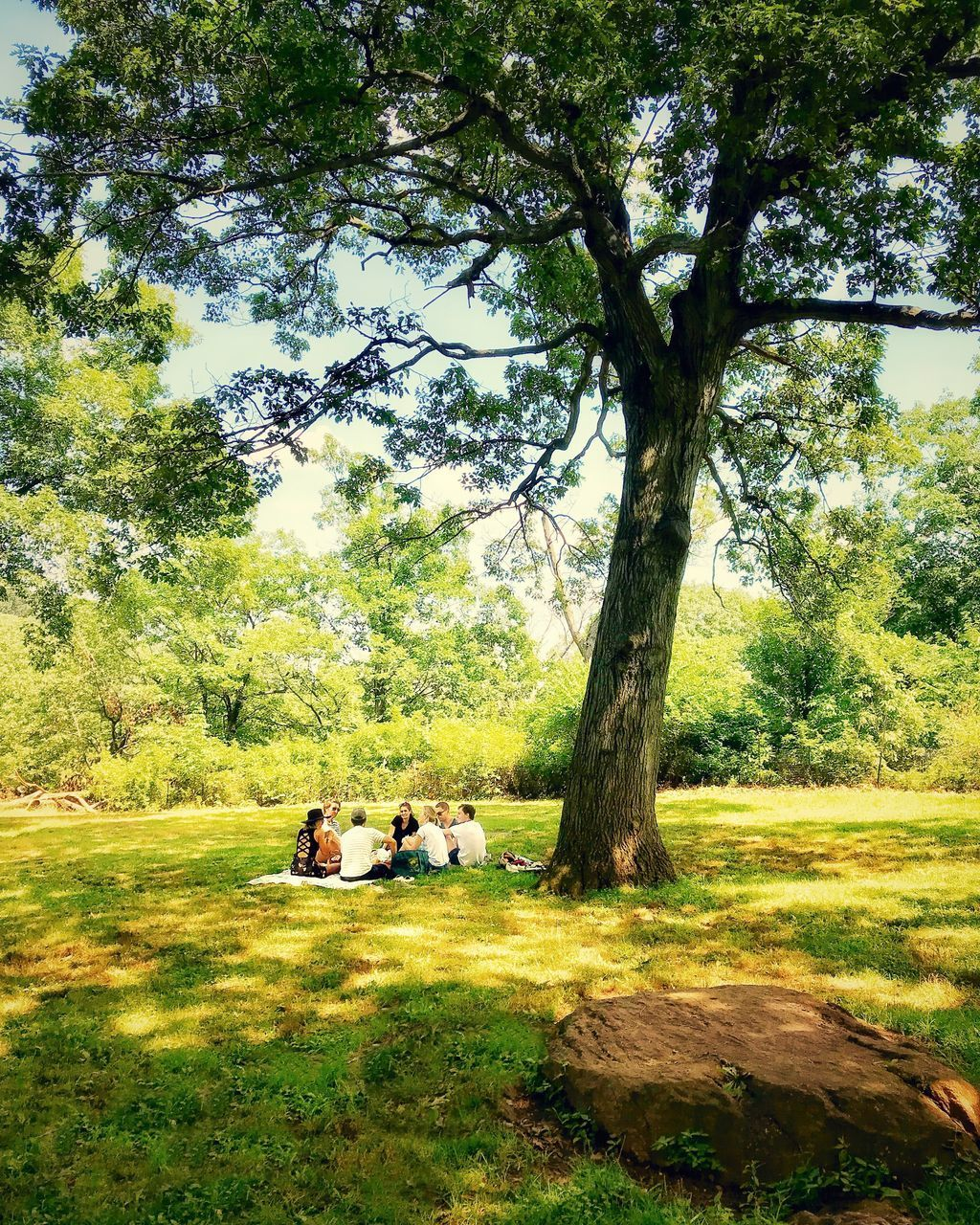 tree, plant, land, grass, field, nature, green color, day, real people, growth, sitting, men, sunlight, beauty in nature, tranquility, outdoors, leisure activity, trunk, togetherness, park, couple - relationship