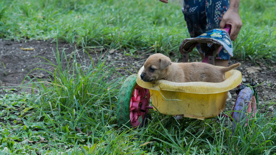 Midsection of man carrying puppy in wheelbarrow