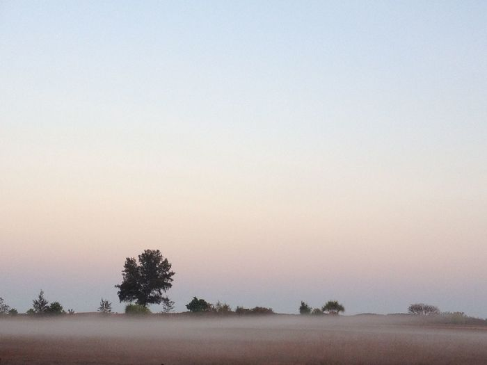 Fog Darwin, Northern Territory Landscape Pink Australia Sky Baum 🌳🌲 Himmel Sanddunes Outdoors No Filter, No Edit, Just Photography Morning EyeEmNewHere