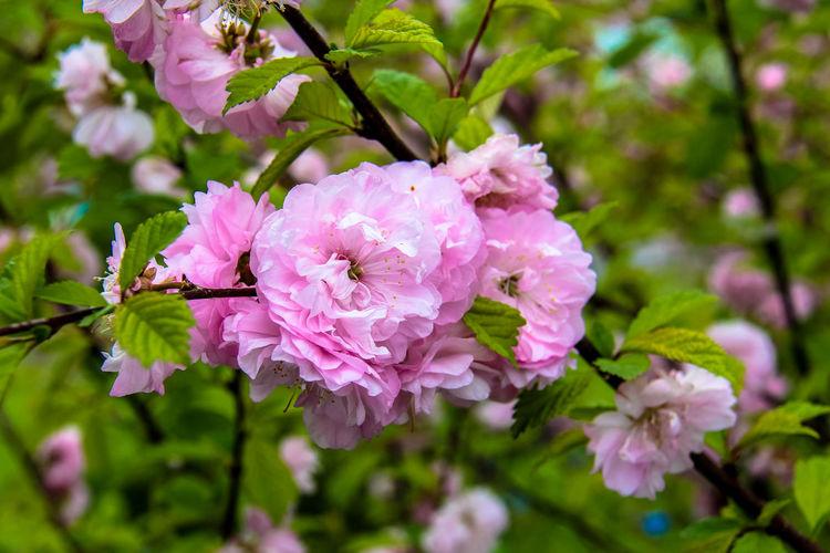 Spring flowers Flower Head Flower Pink Color Tree Springtime Branch Blossom Close-up Plant Cherry Blossom Wild Rose Cherry Tree In Bloom Plant Life Petal Fruit Tree Apple Blossom Blooming