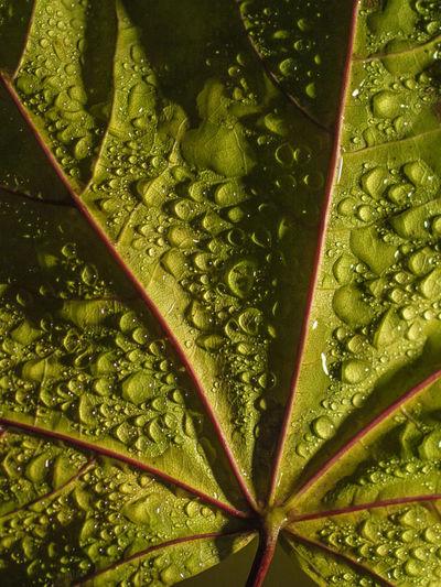 Full frame shot of leaf in water