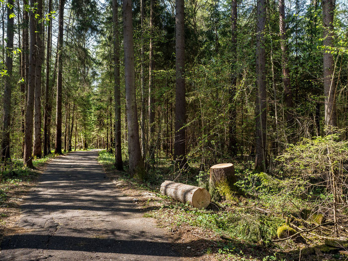 Russia, Moscow, storm, fallen trees Moscow Russia Russia россия Russian Nature Storm Animal Animal Themes Day Direction Forest Growth Land Mammal Nature No People One Animal Outdoors Plant Road Sunlight The Way Forward Tranquility Tree Tree Trunk WoodLand