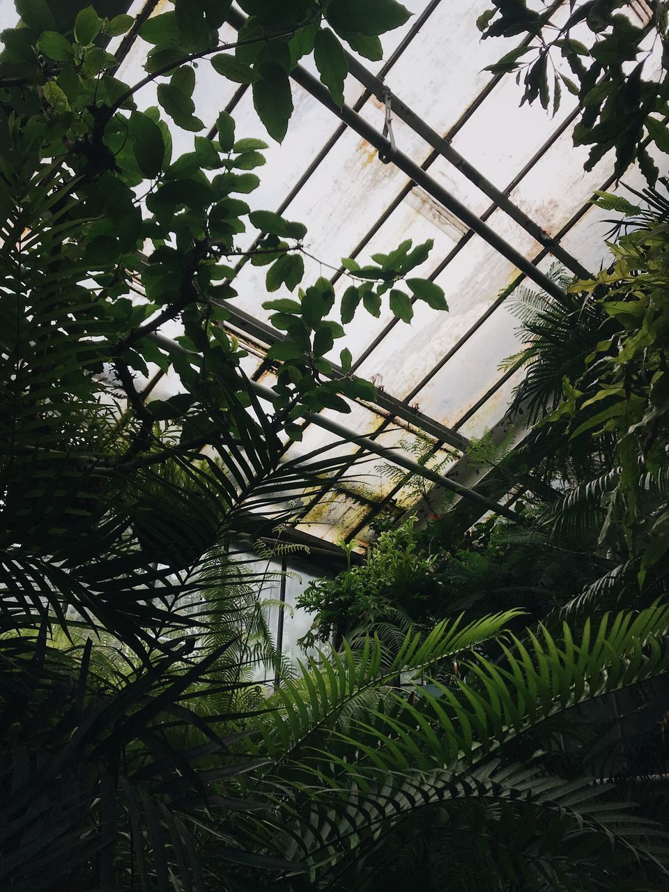 LOW ANGLE VIEW OF TREE IN GREENHOUSE