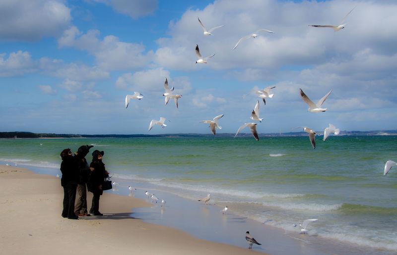 Nature Ostsee Ostseeküste Outdoors Sea And Sky Seagull SEAGULL IN FLIGHT Seagulls And Sea Seaside See Seemöwe Wasser Water