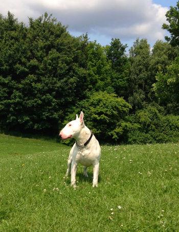 Dogoftheday Dog Love Missing You