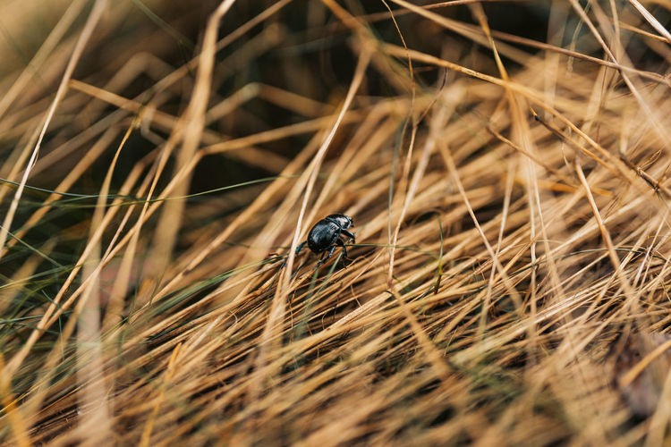 Close-up of insect on dry grass