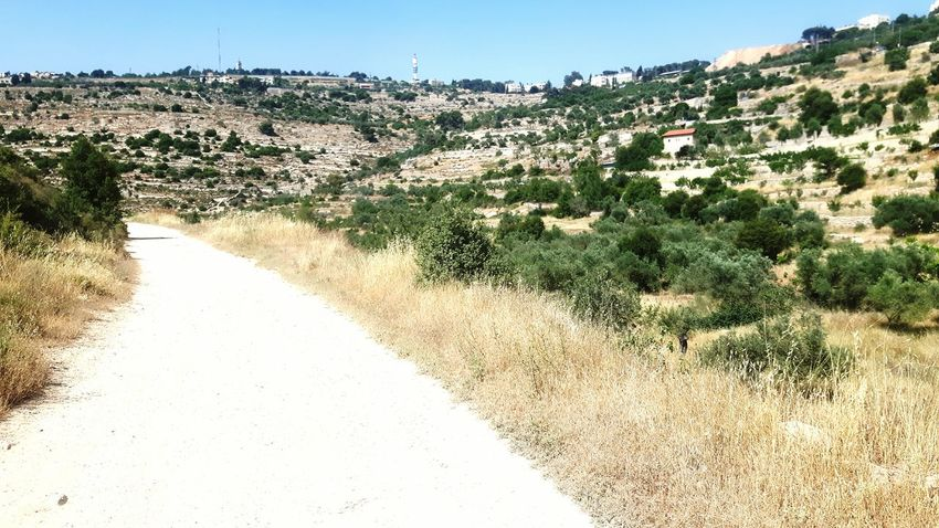 Palestine Palestinian Palestinian Territory West Bank Israel Valley Machrour Valley olive trees Hiking Taking A Stroll