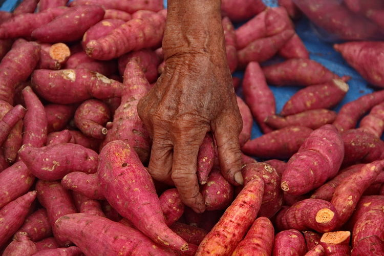 High angle view of cropped hand holding sweet potatoes