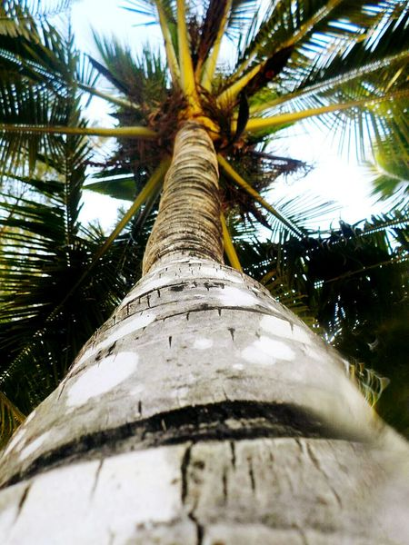 Sky Close-up Outdoors Tree Low Angle View No People Day Nature Palm Tree Lacy Day Beauty In Nature Tree Thailand Thailand Trip Thailand Love Idyllic Amazing Thailand