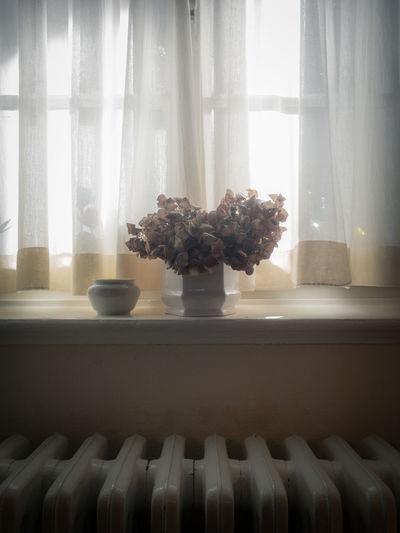 Nklb Interior Views IPhone SE Plant Life Window No People Curtain Flower Vase
