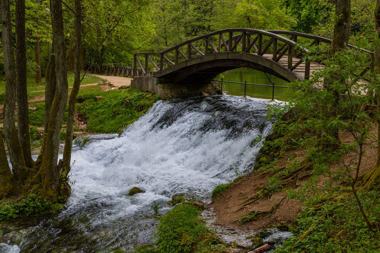 Arch bridge over river amidst trees in forest