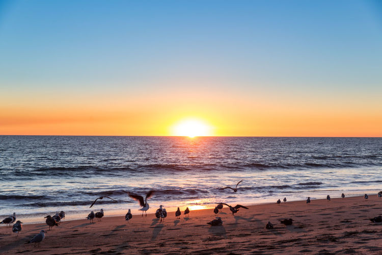 Beach Beauty In Nature Bird Bright Clear Sky Horizon Horizon Over Water Land Motion Nature No People Outdoors Sand Scenics - Nature Sea Sky Sun Sunlight Sunset Tranquil Scene Water Wave