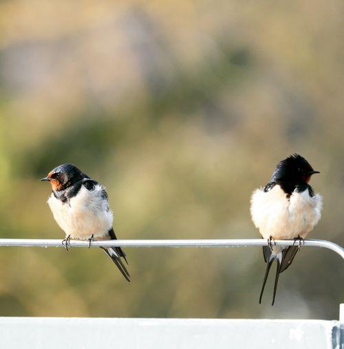 Bird perching on metal