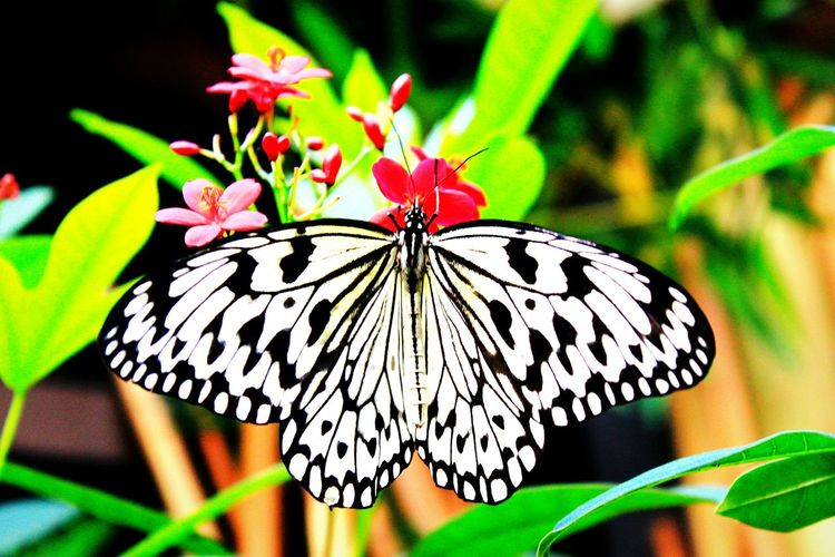 butterfly posing One Animal Butterfly - Insect Insect Wildlife Butterfly Close-up Beauty In Nature Natural Pattern Nature Perching Fragility Animal Markings Animal Wing