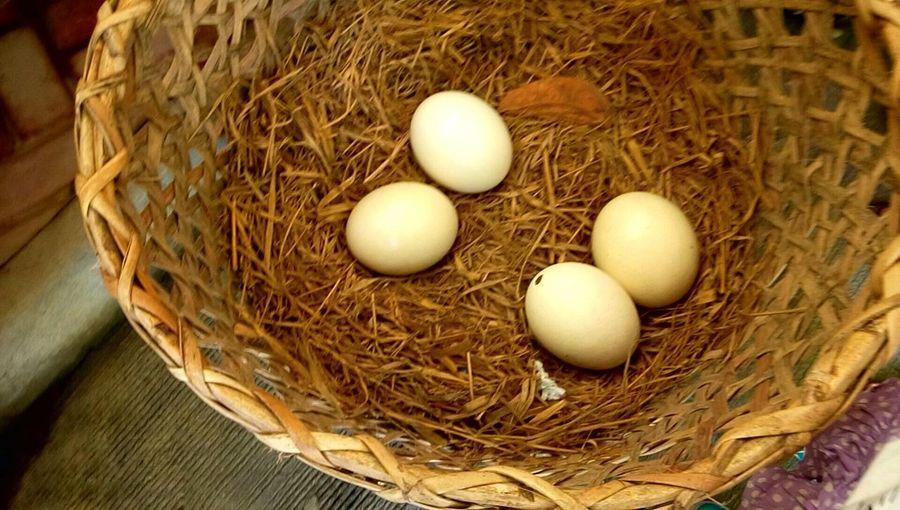 Eggs Ostritch Egss Nest Basket 43 Golden Moments