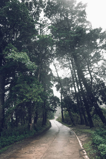 Forest road Fog and rain in the evening Tree Plant The Way Forward Direction Road Growth Nature Transportation Tranquility Beauty In Nature Forest No People Day Footpath Green Color Diminishing Perspective Tranquil Scene Land Outdoors Scenics - Nature WoodLand Long Treelined