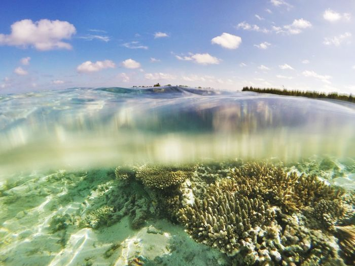 Corals On Seafloor